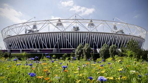 Olympic Stadium with Meadow Flowers