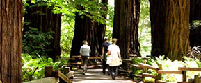 Muir Woods National Monument - Photo: National Park Service