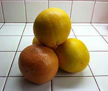 One Grapefruit and Three Sweet Hybrid Grapefruit from the Author's Farmer's Market