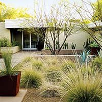 Yard with Drought Tolerant Grasses and Plants in Phoenix, AZ - Photo: Thomas J. Story, Sunset