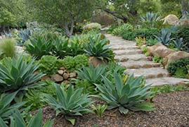 Rock Garden with Succulent Plants - Photo: John Evarts, Cachuma Press