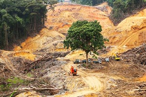 Deforestation - Logging in Tropical Rainforest