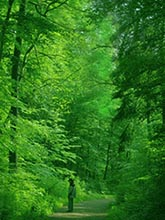 Person Contemplating a Beautiful Green Forest
