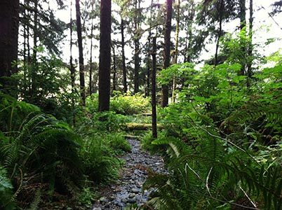 Trees, Ferns, Stream in Prairie Creek Redwoods State Park, CA - Photo by Author