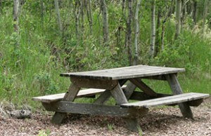 Weathered Picnic Table in Campground Clearing