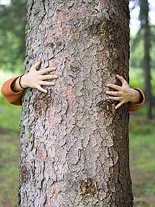 Woman's Arms and Hands Hugging Tree Trunk