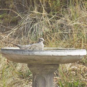 A Bird Relaxing in Our Birdbath