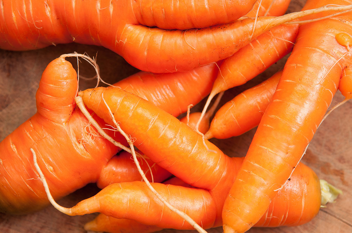 Pile of Raw Ugly Carrots
