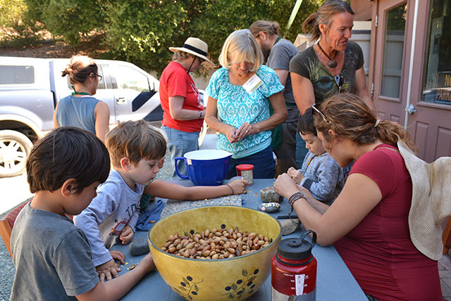 San Luis Obispo Botanical Garden Volunteers Preparing Acorns