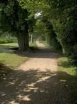 Scenic Walking Path