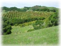 Old Creek Ranch Organic Farm