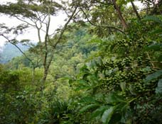 Rainforest Canopy - photo from Sustainable Agriculture Network