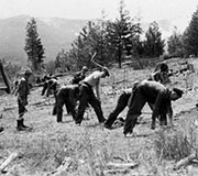 Civilian Conservation Corps Planting Trees in Lolo National Forest, Montana - Photo: U.S. Forest Service
