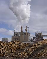 Paper Pulp Mill with Thousands of Logs