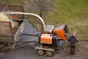Person Feeding Tree Branches into Wood Chipper and then into Truck