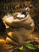 Burlap Sack of Organic Coffee Beans