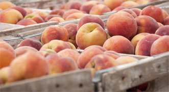 Wood Crates Filled with Peaches - Photo: USDA NOP