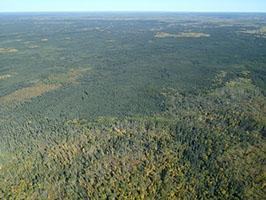 Boreal Forest in Alberta, Canada - Photo: Ken Ilgunas