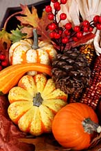 Thanksgiving Harvest - Pumpkin, Gourds, Berries and Corn