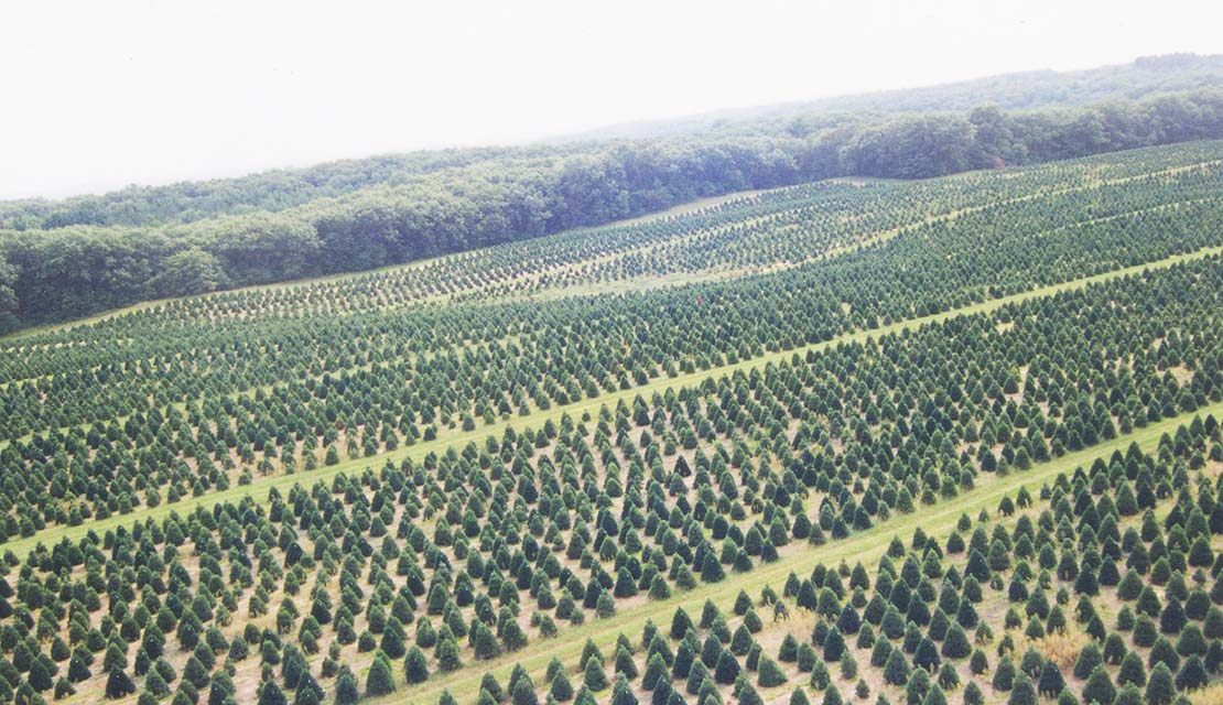 aerial view of christmas tree farm photo national christmas tree association