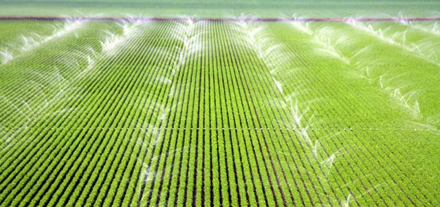 Crops Being Watered by Sprinklers