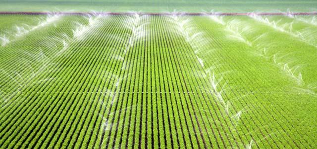 Crops Being Watered by Sprinklers