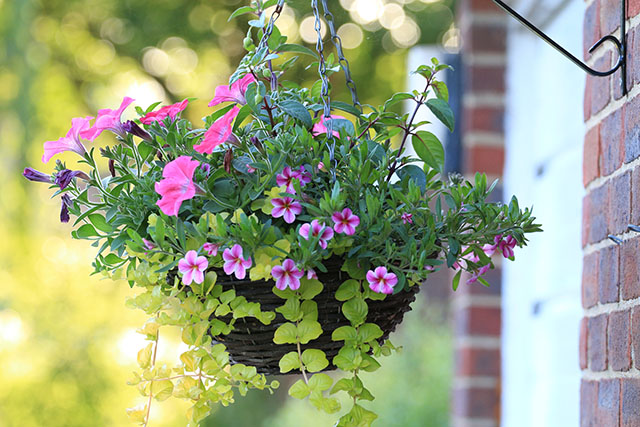 Hanging Basket with Plants and Flowers