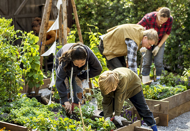 People Planting Vegetables in a Community Garden