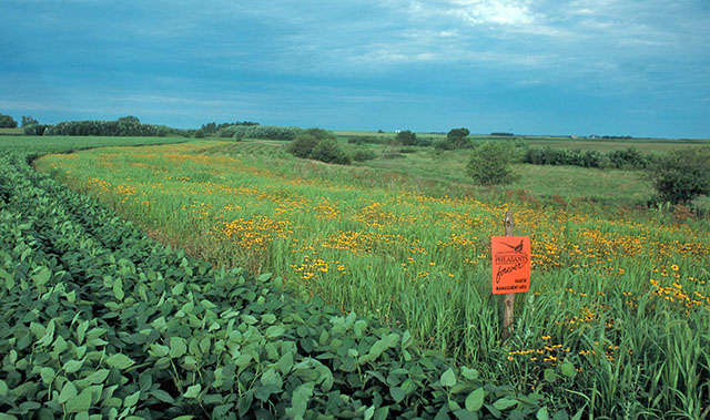 Organic Farm Buffer Zone with Pheasants Forever Sign
