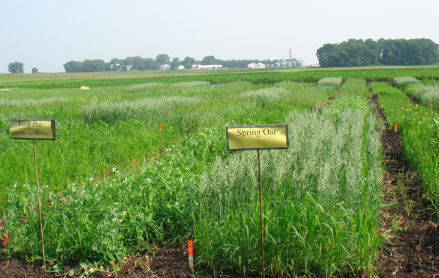 Organic Farm Cover Crop Plots at University of Minnesota