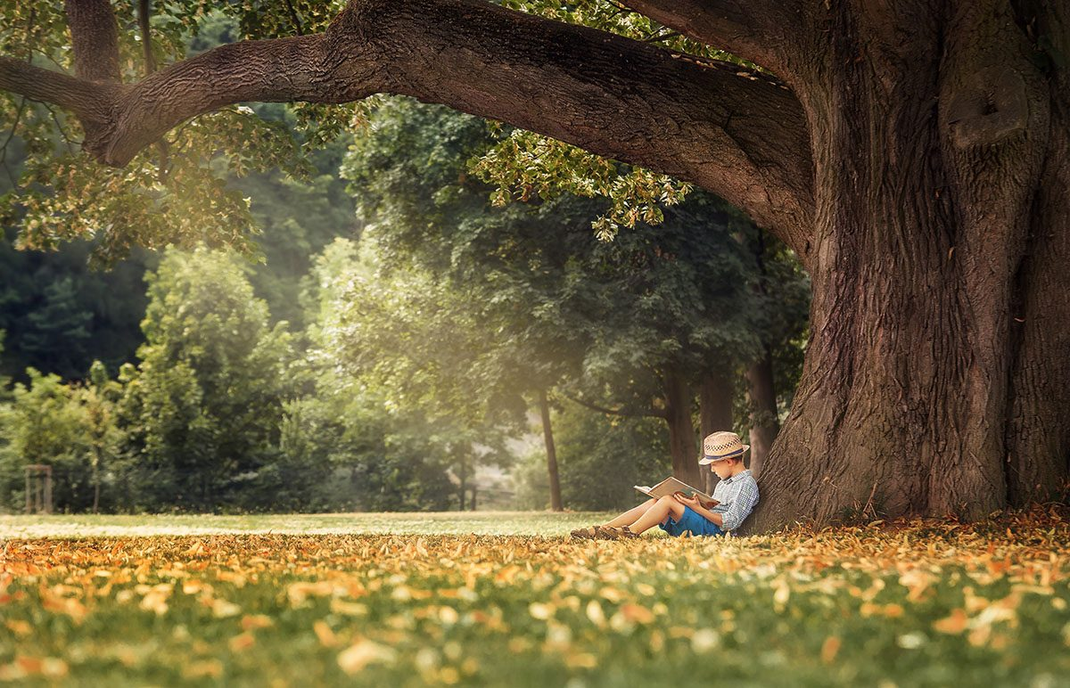 Boy Sitting Beneath a Big Linden Tree Reading a Book