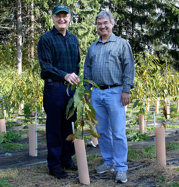 Charles Maynard and William Powell with Transgenic American Chestnut Tree Seedling