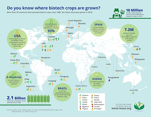 Where Biotech Crops Are Grown Around the World