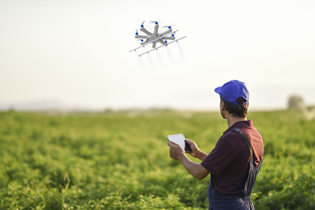 Farmer Spraying Pesticide on His Crops Using a Drone