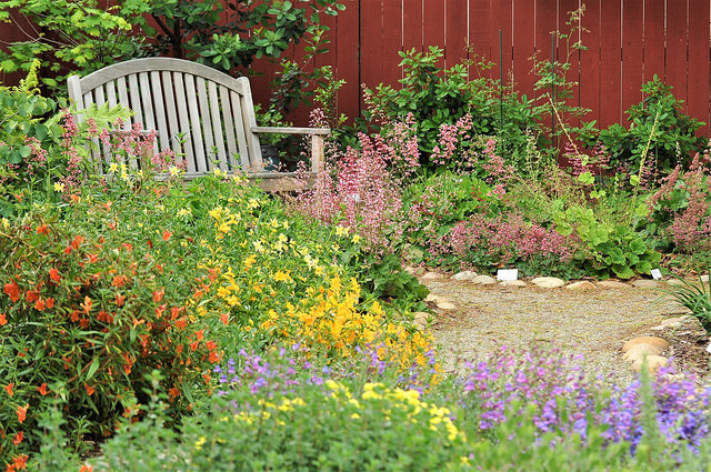California Native Plant Garden with Bench