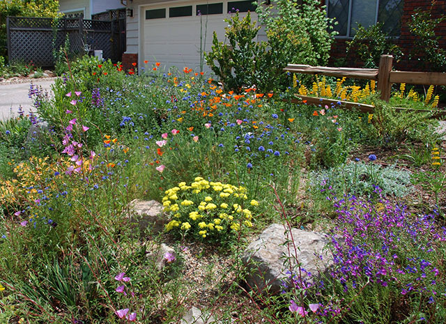 California Yard with Native Plant Landscaping