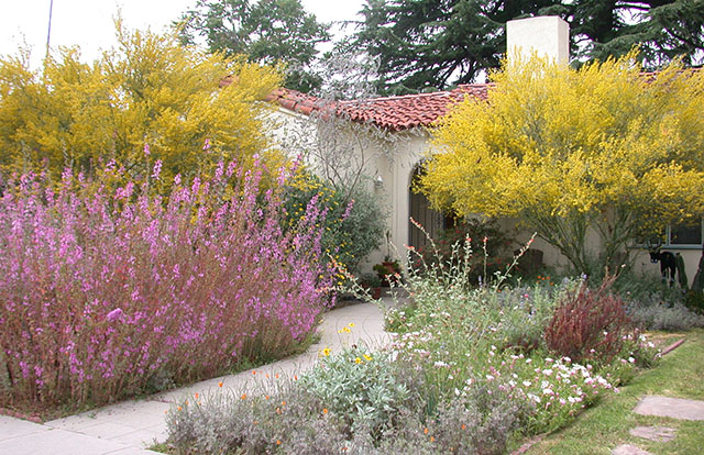 California Yard with Native Plants and Palo Verde Tree