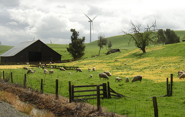 Wind Turbines on a Sheep Farm in Rio Vista, CA