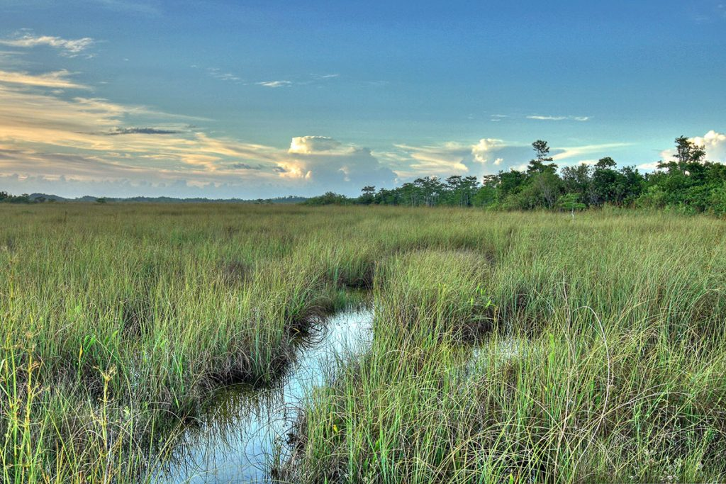 Sawgrass Prairie at Everglades National Park