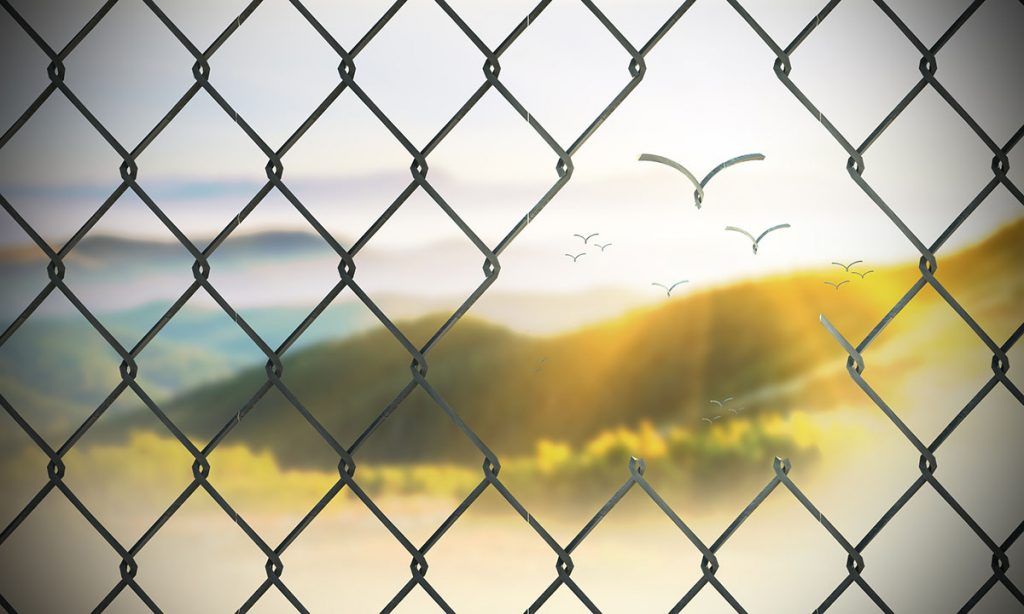Birdlike Links Flying to Freedom Through Hole in Chain Link Fence