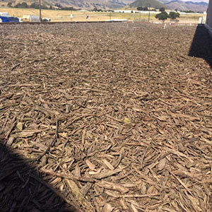 Tree Root Air Filter for Compost Building at San Luis Obispo Kompogas Plant