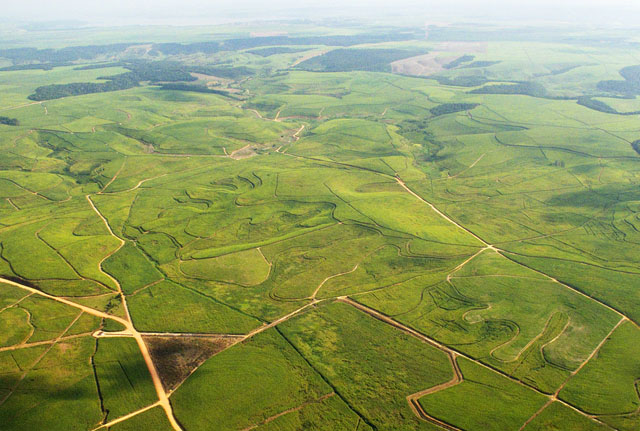 Aerial View of Sugar Cane Plantations in Northeast Brazil