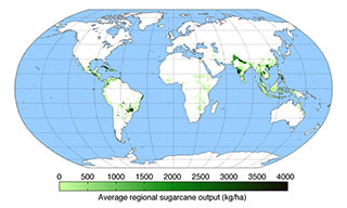 Sugar Cane Yield World Map