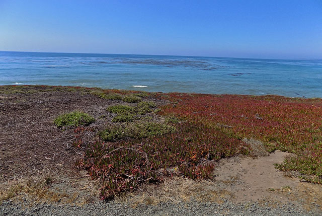 Buff Trail at Fiscalini Ranch Preserve in Cambria, CA on August 23, 2019