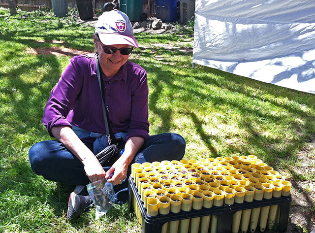 Linda Poppenheimer Planting Monterey Pine Seeds at Earth Day - April 21, 2019