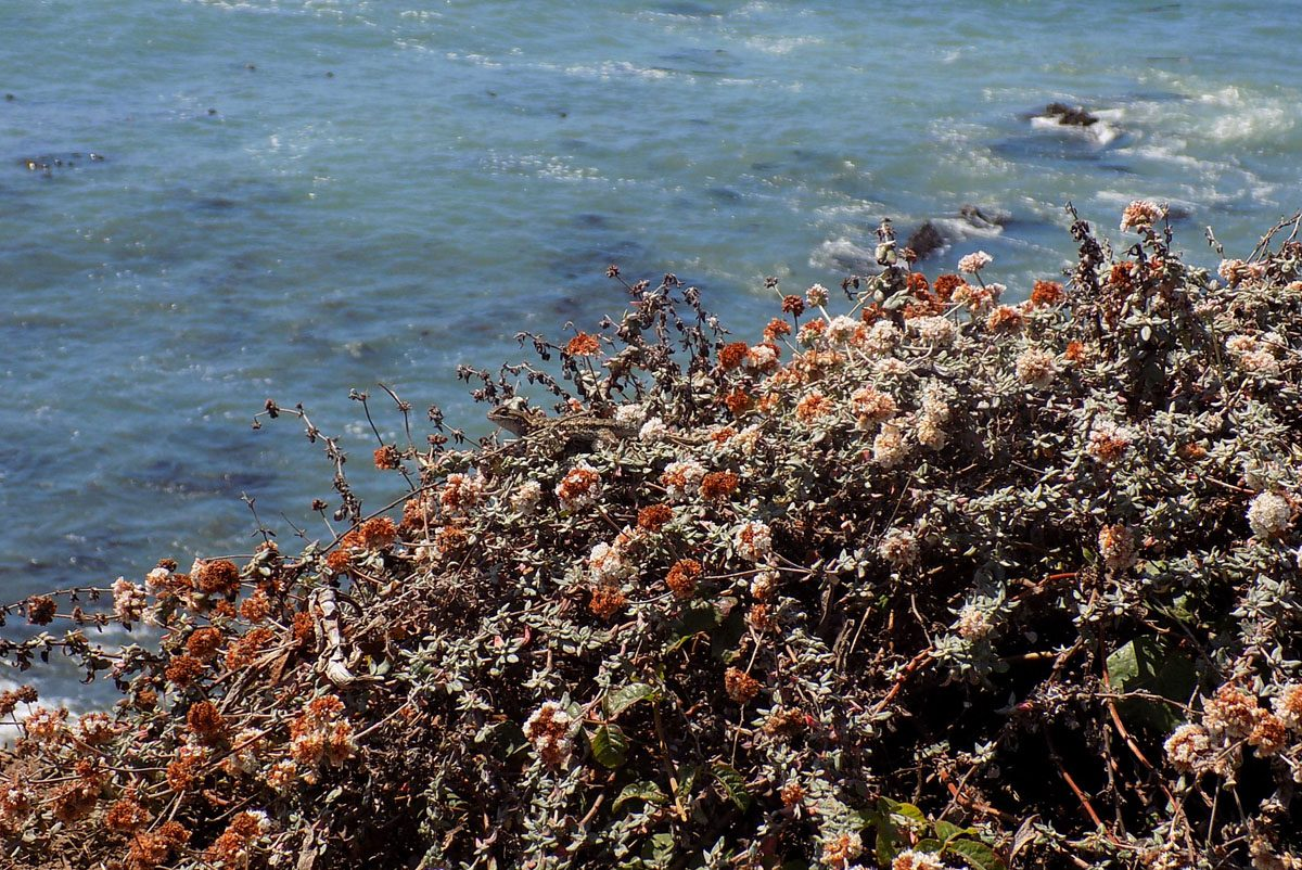 Why You Should Volunteer to Collect Native Plant Seeds