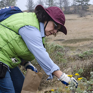 Maria Susperreguy Seed Collecting at Fiscalini Ranch Preserve, CA on August 17, 2019