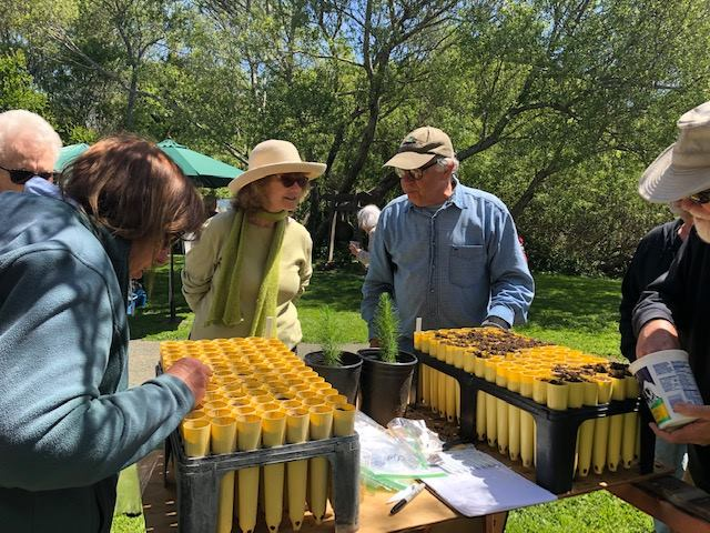Rick Hawley Helping People Plant Monterey Pine Seeds at Earth Day on April 21, 2019