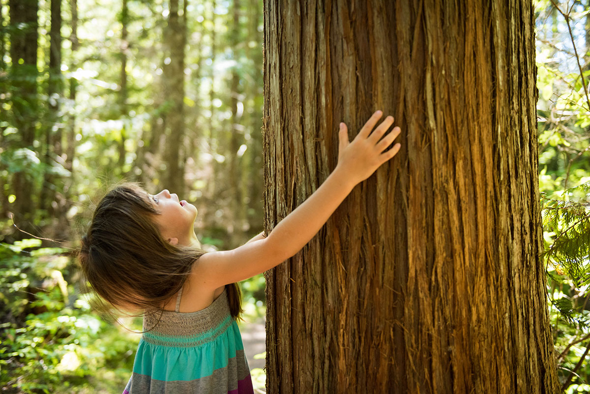 Young Girl Looking Up Touching a Huge Tree
