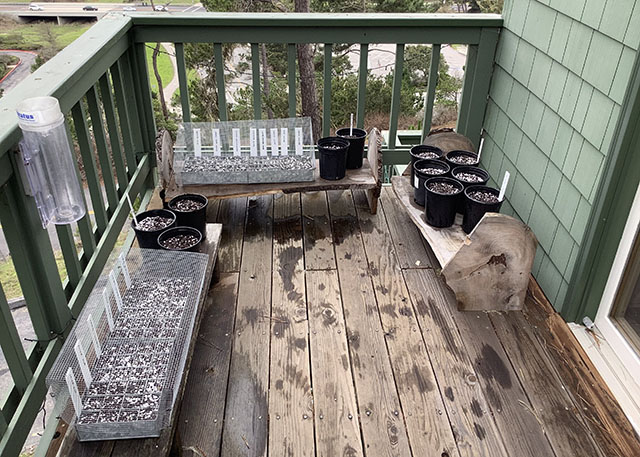 Pots Planted with Native Plant Seeds on Wood Deck